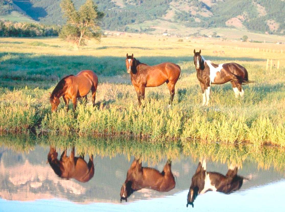 Kuddedieren-paarden