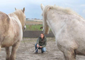 Tamara-Zenzi-coaching-paarden