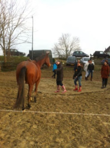 Teamcoaching-paarden