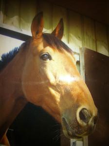 Zenzi-paardencoaching-Benz