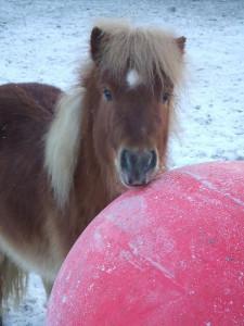 Zenzi-paardencoaching-tibo